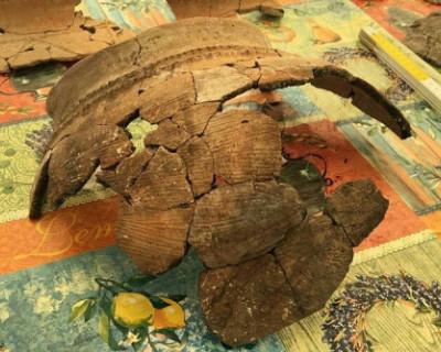 В окрестностях Севастополя найдено поселение бронзового века