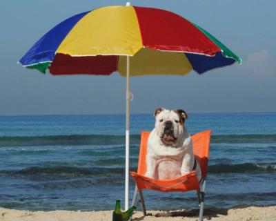 Как севастопольцам отдыхать на пляже с собакой
