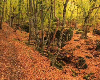 В Севастопольском штабе ОНФ нашли ничейный лес!