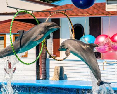 Суд Севастополя потребовал снести дельфинарий в Артбухте