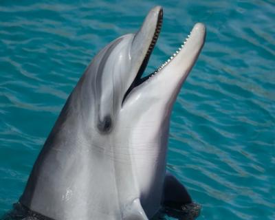 Тайна севастопольского дельфинария