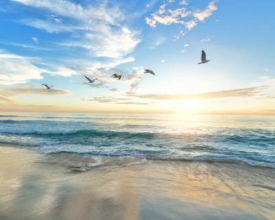 Крымский предприниматель бесплатно разместил 150 торговых точек на пляже