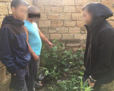 Крымчанин выращивал коноплю в огороде