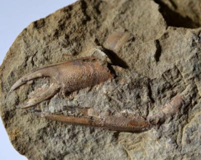 В Севастополе снова открылся палеонтологический музей