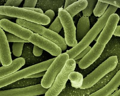 В Севастополе наблюдается снижение инфекционных заболеваний