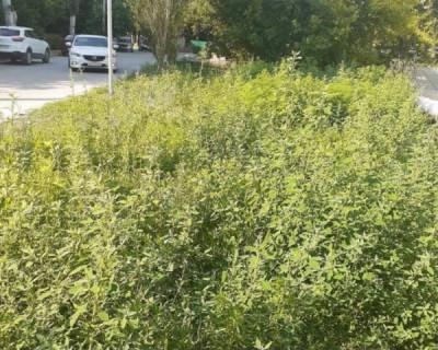 В Севастополе старательно косят траву