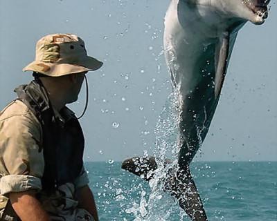 Как краснодеревщик помогал дельфинам диверсантов ловить (фото, видео)