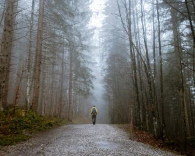 В Крыму туристы заблудились в лесу