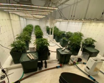 Крымчанин выращивал коноплю у себя дома