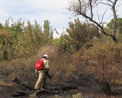 Сколько гектаров сухой травы и растительности выжжено огнём за сутки в Севастополе?
