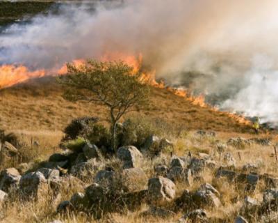 Спасатели МЧС потушили несколько крупных пожаров в Севастополе
