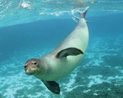 В России исчезли 11 редких видов животных