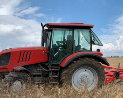 В Евпаторийском районе посадят 1,7 тысяч ясеней