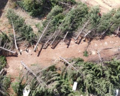 В Севастополе проверят законность вырубки деревьев в Казачьей бухте