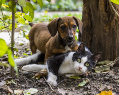 В Севастополе проходит чипирование домашних животных