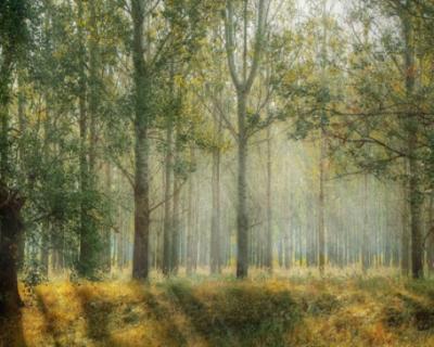 Прокуратура Севастополя отправилась в лес