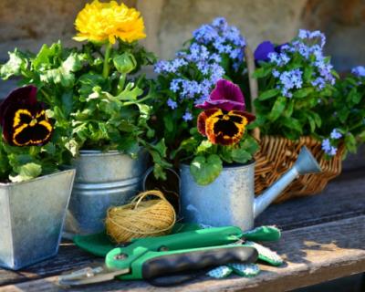 Что делать севастопольцам, если председатель садового товарищества действует незаконно