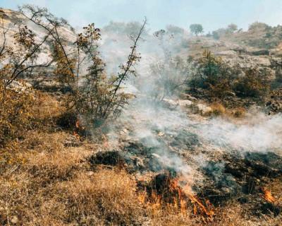 В Килен-балке загорелась трава и кустарники
