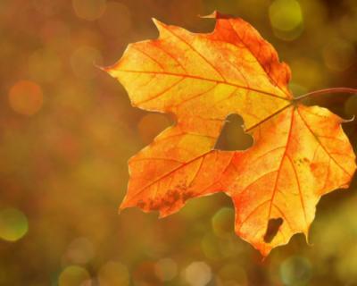 В Севастополь пришла осень