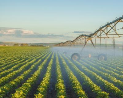 Сельхозпроизводители Севастополя получат господдержку