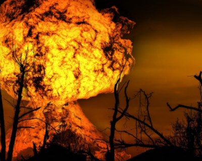Крымские леса стали реже гореть