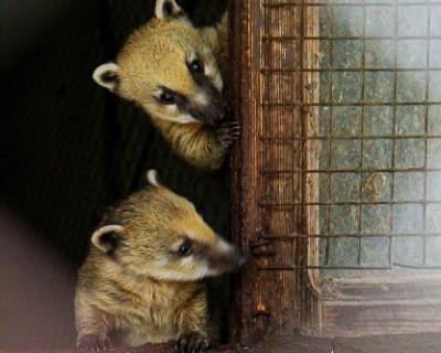 Семья обитателей зооуголка в Симферополе показала своих первенцев