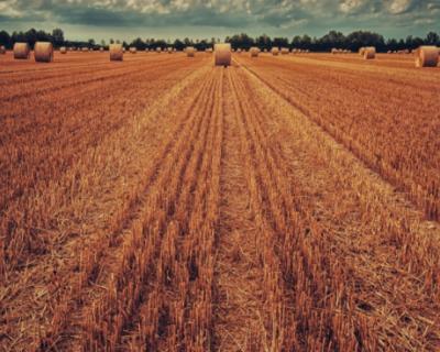 Крымские аграрии уже получили 1,6 млрд рублей господдержки