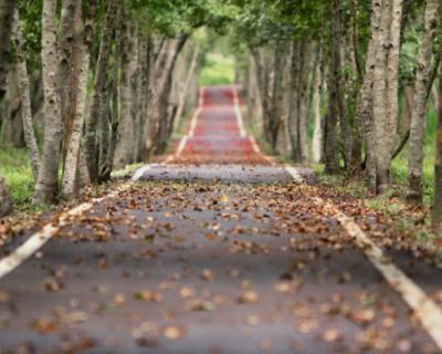 В Керчи высадят более 600 деревьев