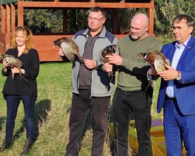 В леса Крыма выпустили фазанов