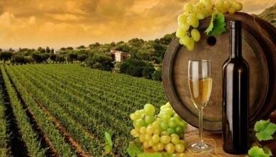 Спасая крымское вино