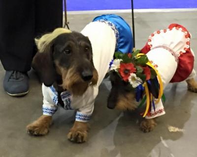 В Киеве уже собак одевают в вышиванки и шаровары (фото)